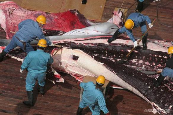 Yushin Maru and the Kyo Maru No.1 transfer whales to the Nisshin Maru factory ship, Southern Ocean/ Dec 21, 2005