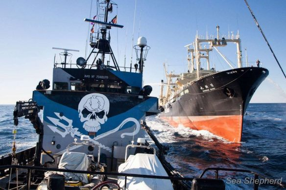 Nisshin Maru rams The Bob Barker in a series of clashes in the Southern Ocean. (Photo: Sea Shepherd)