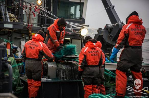 Sea Shepherd crew works on the deadly gillnet (Photo: Jeff Wirth)
