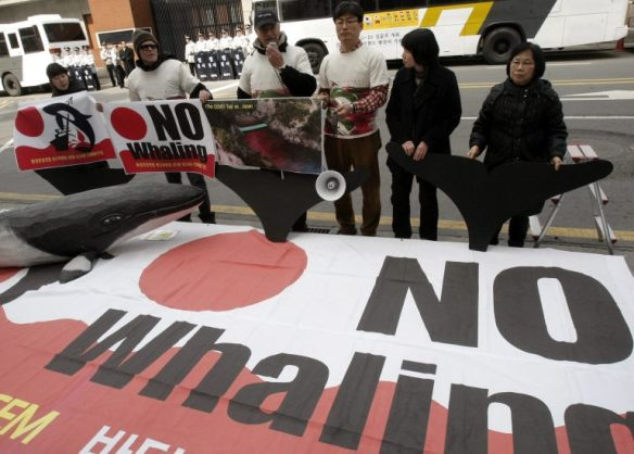 Environmentalists stage a rally against Japan's whaling in front of the Japanese Embassy in Seoul, South Korea, Friday, March 19, 2010. Source: AP Photo/Ahn Young-joon